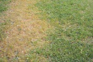 Lawn Treatment by Gato Lawn & Pest Control