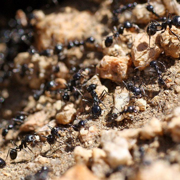 Pest Control Treatment by Gato Lawn & Pest Control